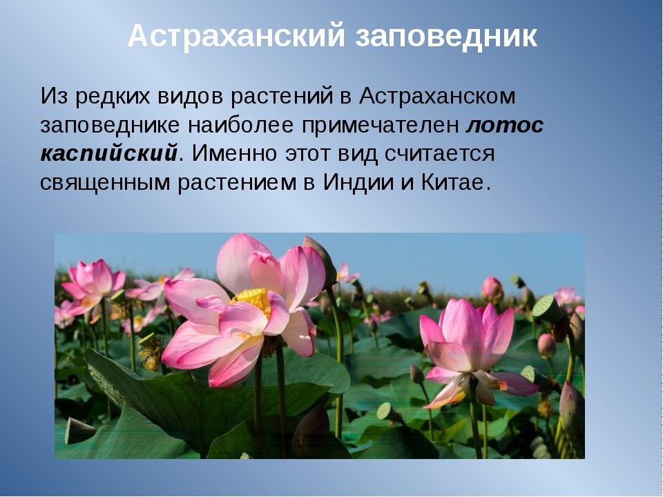 Астраханский заповедник Из редких видов растений в Астраханском заповеднике н...