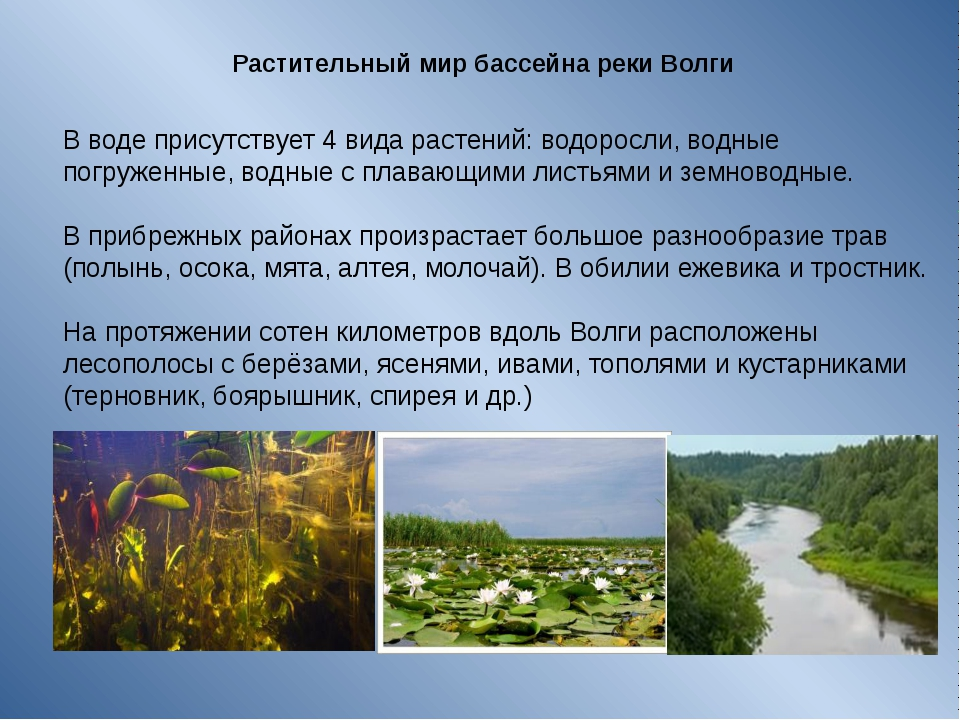 Растительный мир бассейна реки Волги  В воде присутствует 4 вида растений: в...