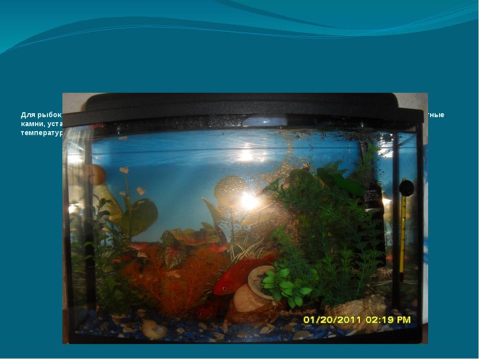 Для рыбок мы создали комфортные условия: на крышке установили освещение, на...