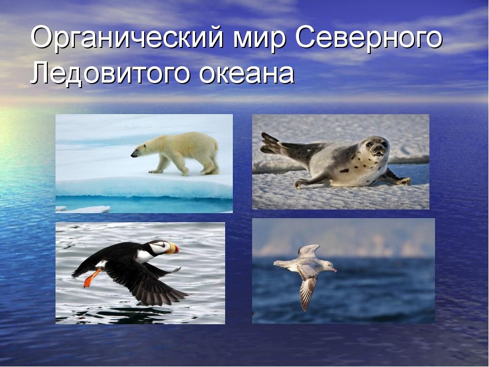Органический мир Северного Ледовитого океана