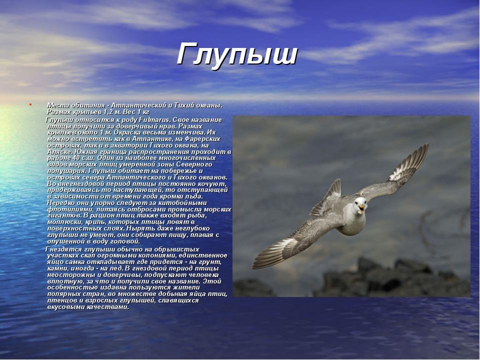 Глупыш Места обитания - Атлантический и Тихий океаны. Размах крыльев 1,2 м....