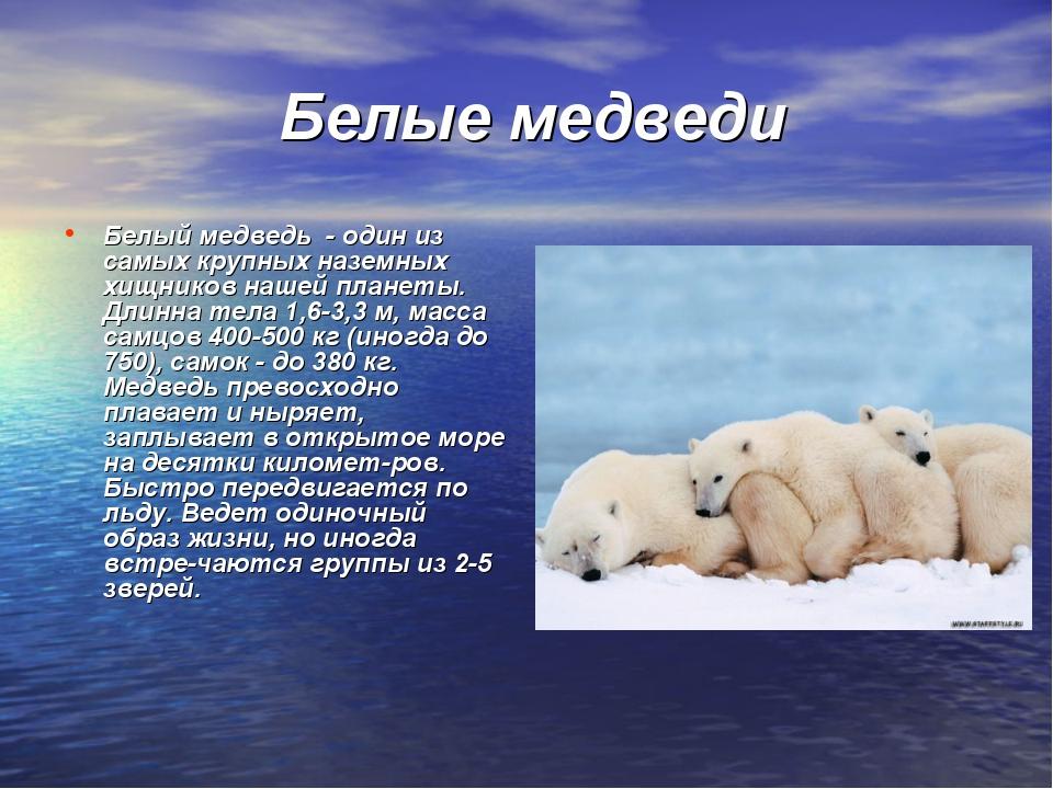 Белые медведи Белый медведь - один из самых крупных наземных хищников нашей...