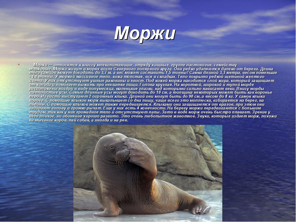 Моржи Моржи— относятся к классумлекопитающие, отрядухищные, группела...