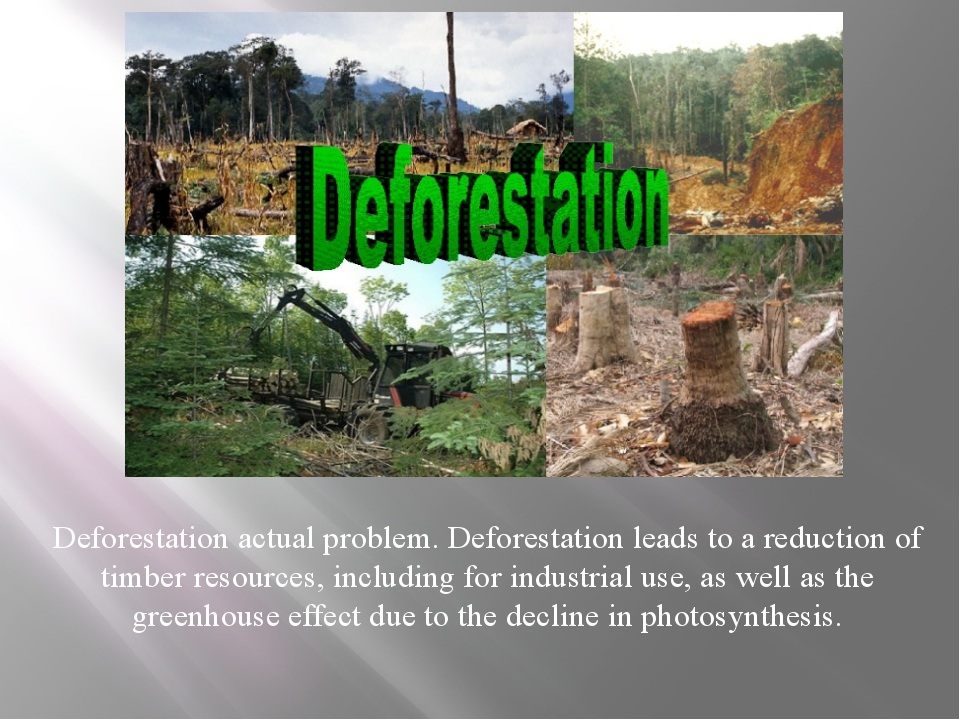 Deforestation actual problem. Deforestation leads to a reduction of timber r...