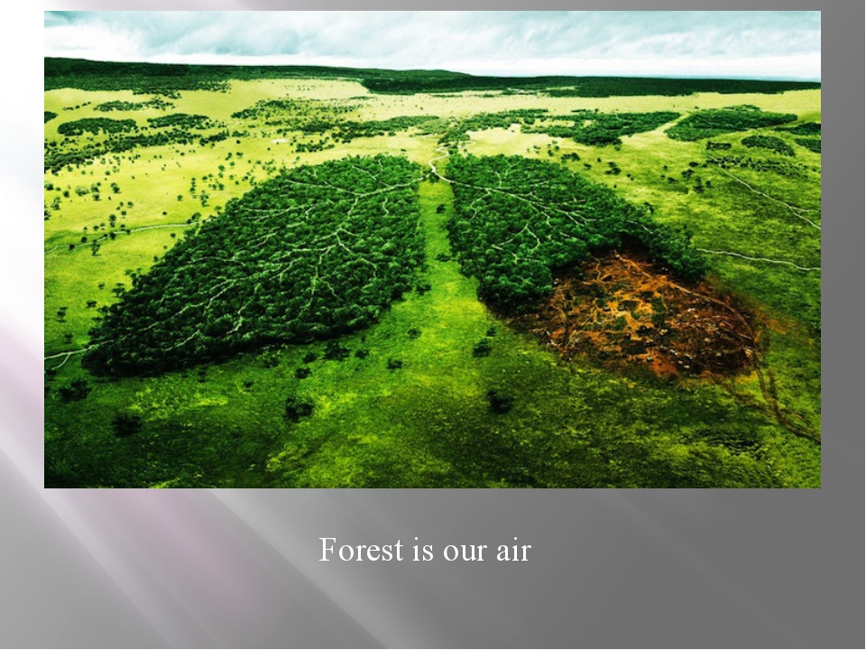 Forest is our air
