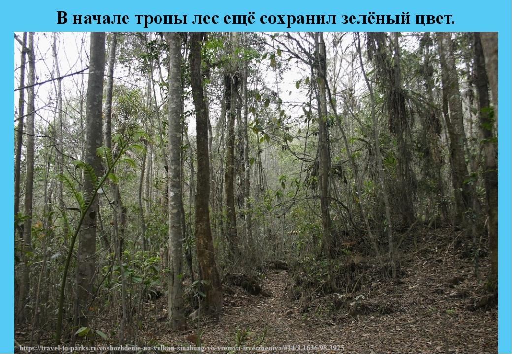 В начале тропы лес ещё сохранил зелёный цвет.