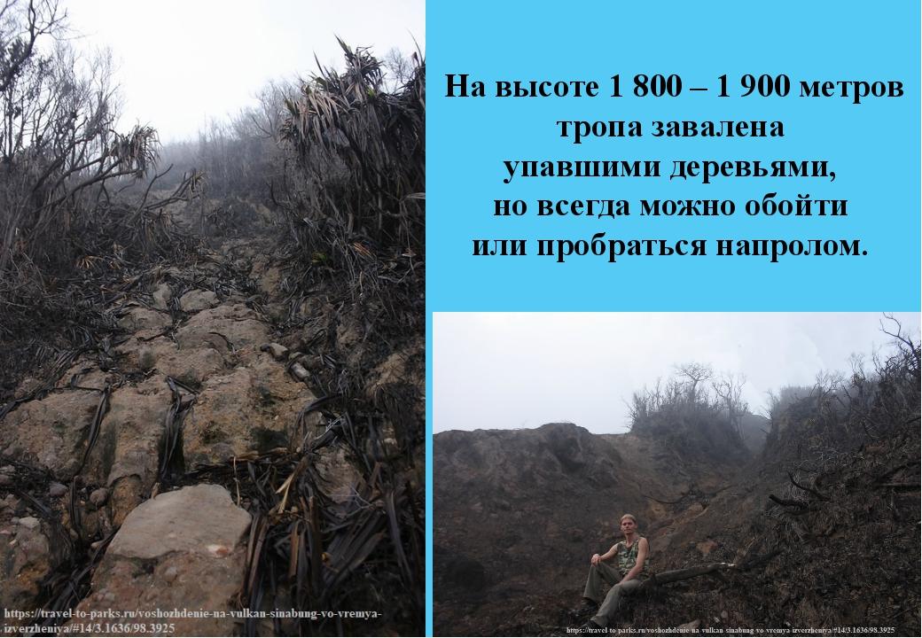 На высоте 1 800 – 1 900метров тропа завалена упавшими деревьями, но всегда м...