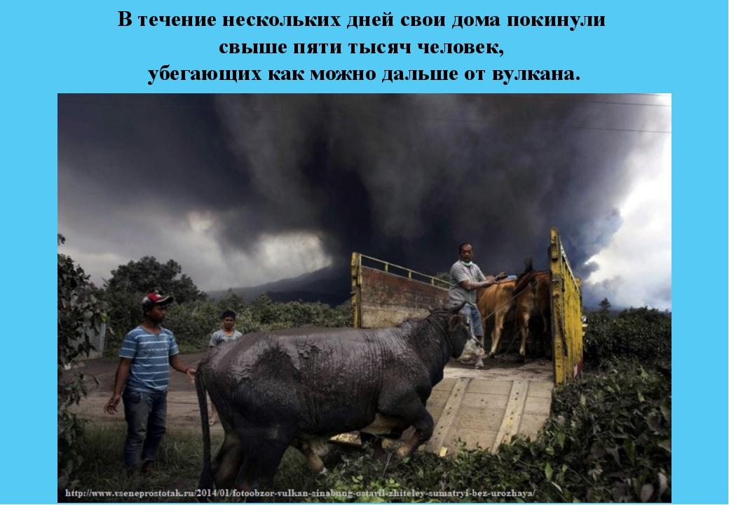 В течение нескольких дней свои дома покинули свыше пяти тысяч человек, убегаю...