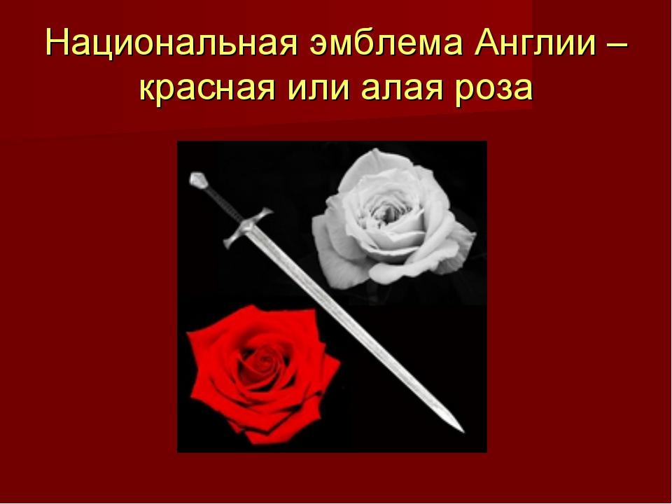 Национальная эмблема Англии – красная или алая роза