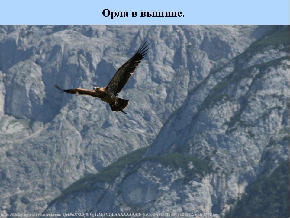 Орла в вышине.
