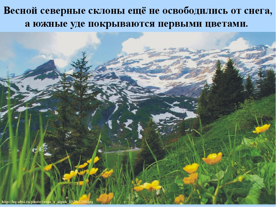 Весной северные склоны ещё не освободились от снега, а южные уде покрываются...