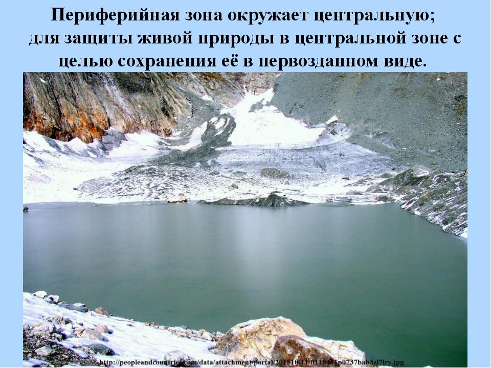 Периферийная зона окружает центральную; для защиты живой природы в центрально...