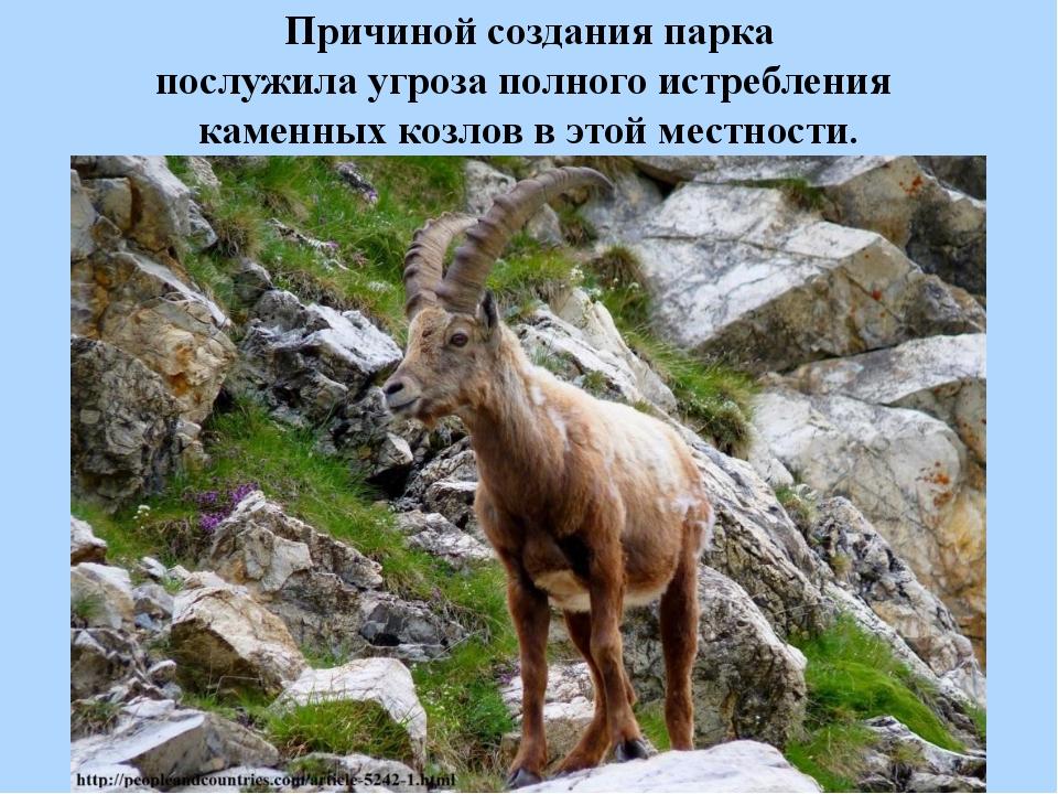 Причиной создания парка послужила угроза полного истребления каменных козлов...