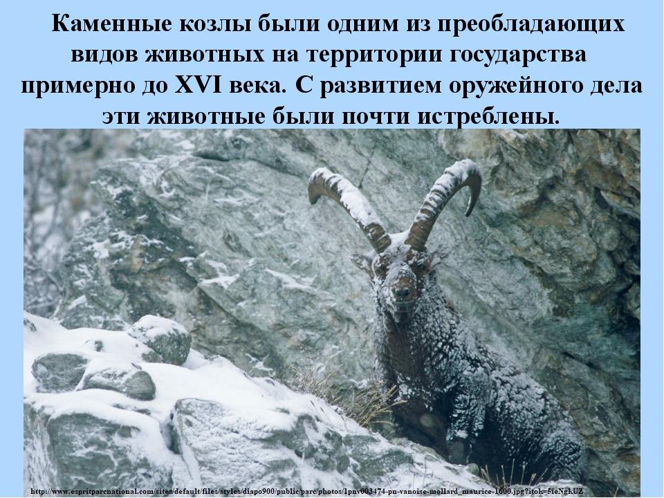 Каменные козлы были одним изпреобладающих видов животных натерритории гос...