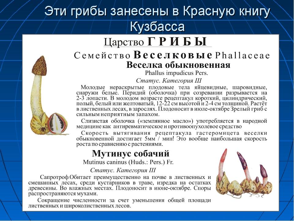 Эти грибы занесены в Красную книгу Кузбасса