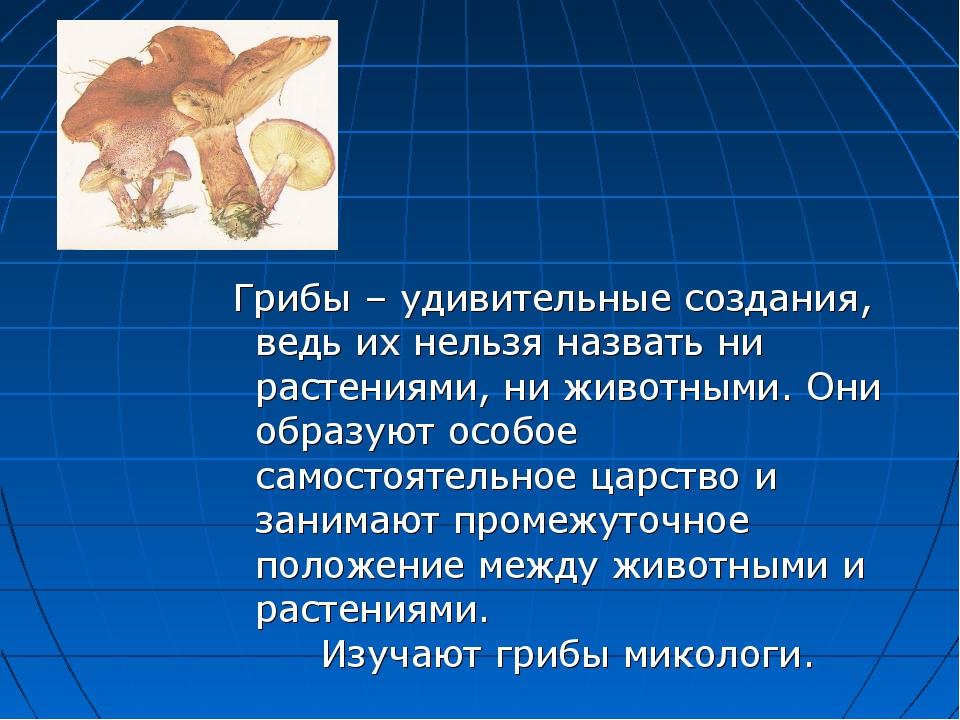 Грибы – удивительные создания, ведь их нельзя назвать ни растениями, ни живот...