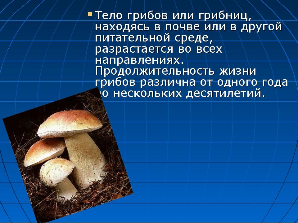 Тело грибов или грибниц, находясь в почве или в другой питательной среде, ра...