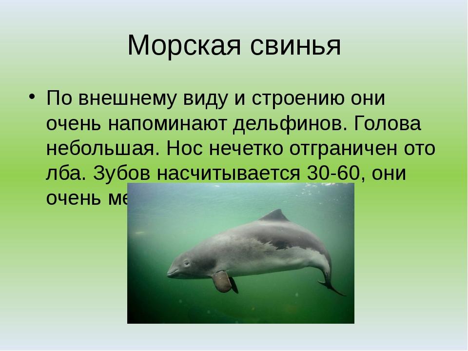 Морская свинья По внешнему виду и строению они очень напоминают дельфинов. Го...