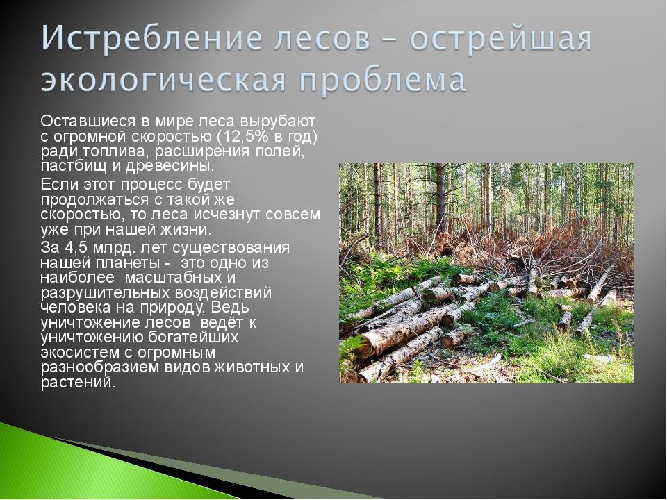Оставшиеся в мире леса вырубают с огромной скоростью (12,5% в год) ради топли...