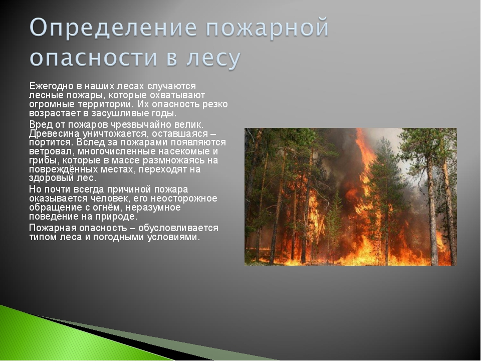 Ежегодно в наших лесах случаются лесные пожары, которые охватывают огромные т...