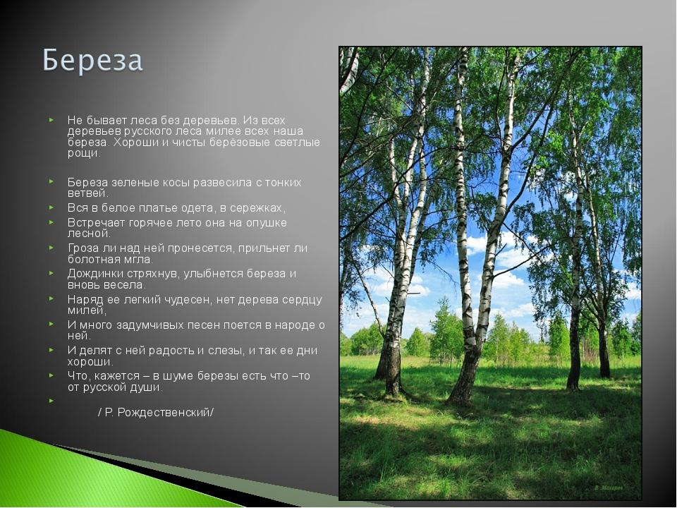 Не бывает леса без деревьев. Из всех деревьев русского леса милее всех наша б...