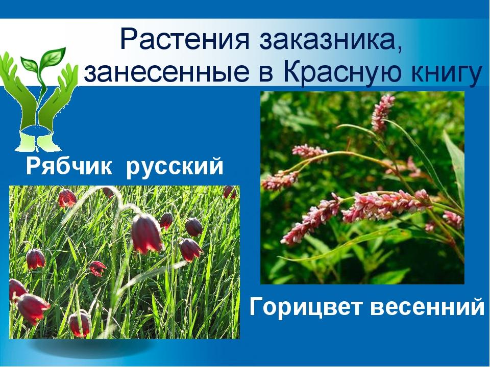 Растения заказника, занесенные в Красную книгу Рябчик русский Горицвет весенний
