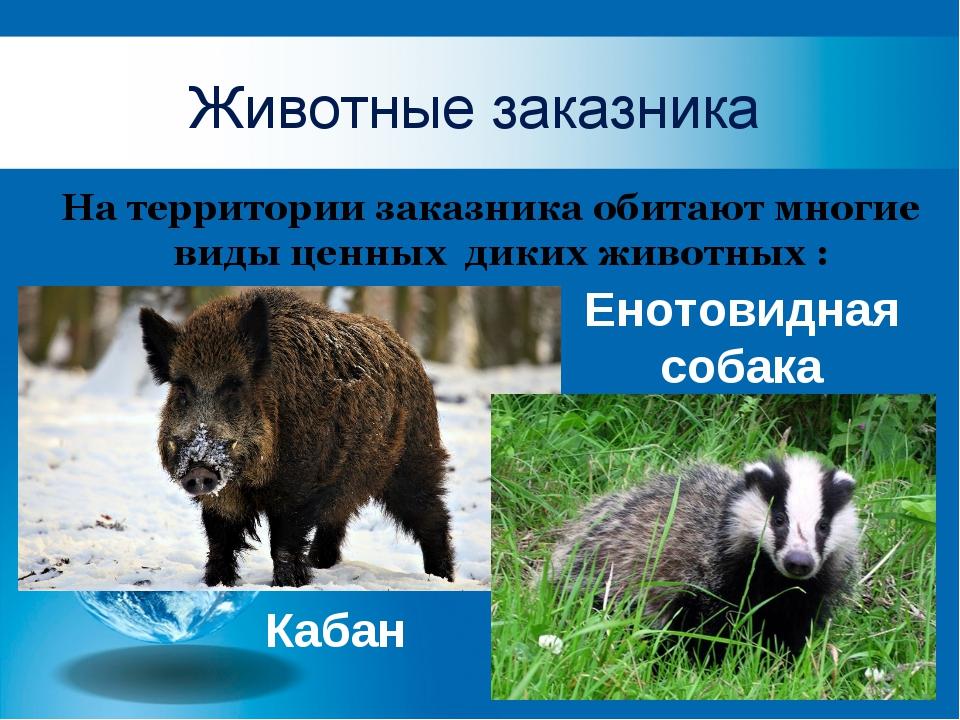 Животные заказника На территории заказника обитают многие виды ценных диких...