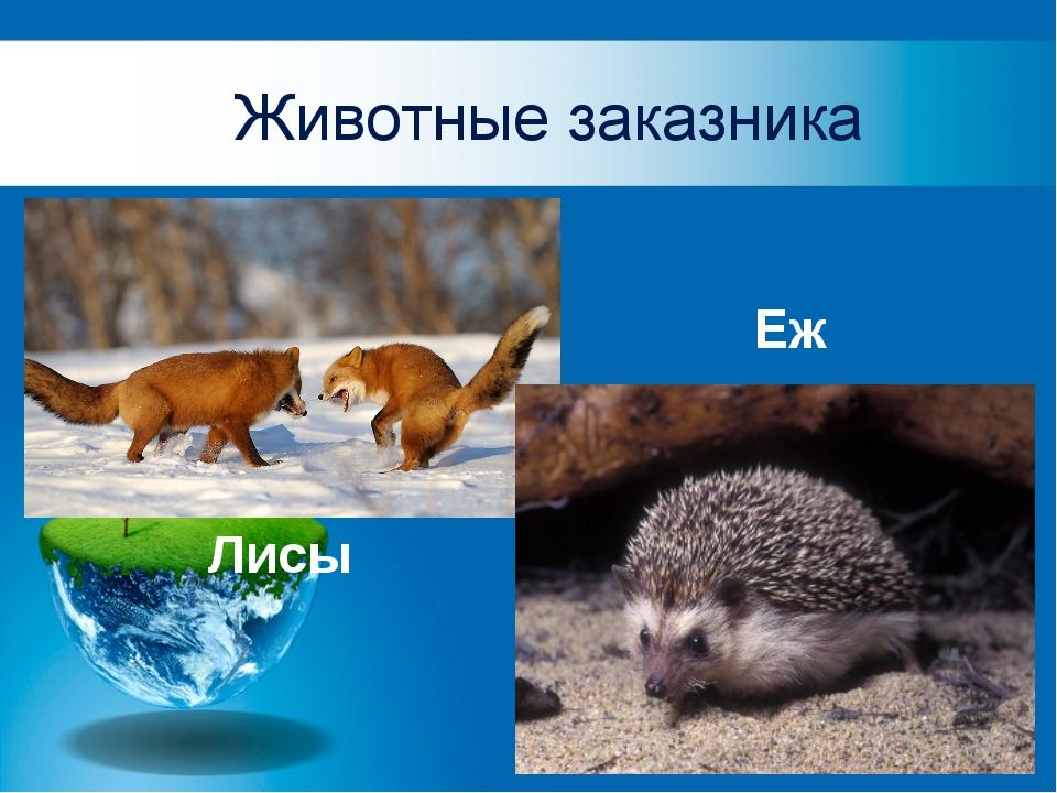 Животные заказника Лисы Еж