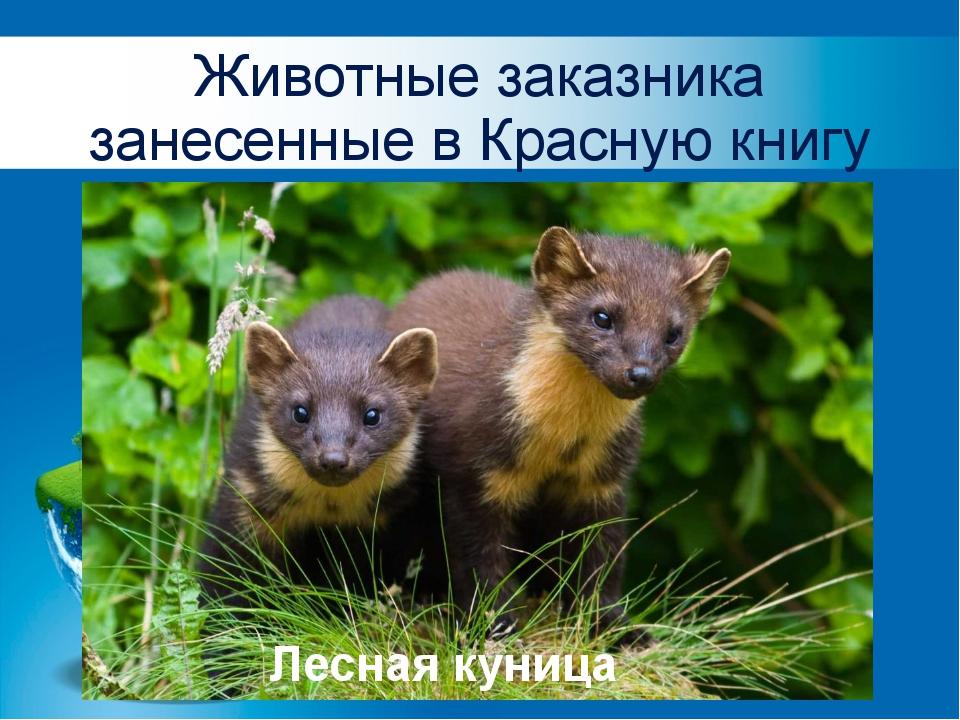 Животные заказника занесенные в Красную книгу Лесная куница