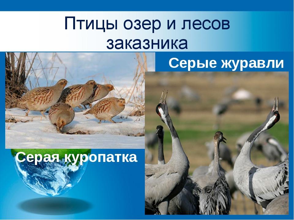 Птицы озер и лесов заказника Серая куропатка Серые журавли