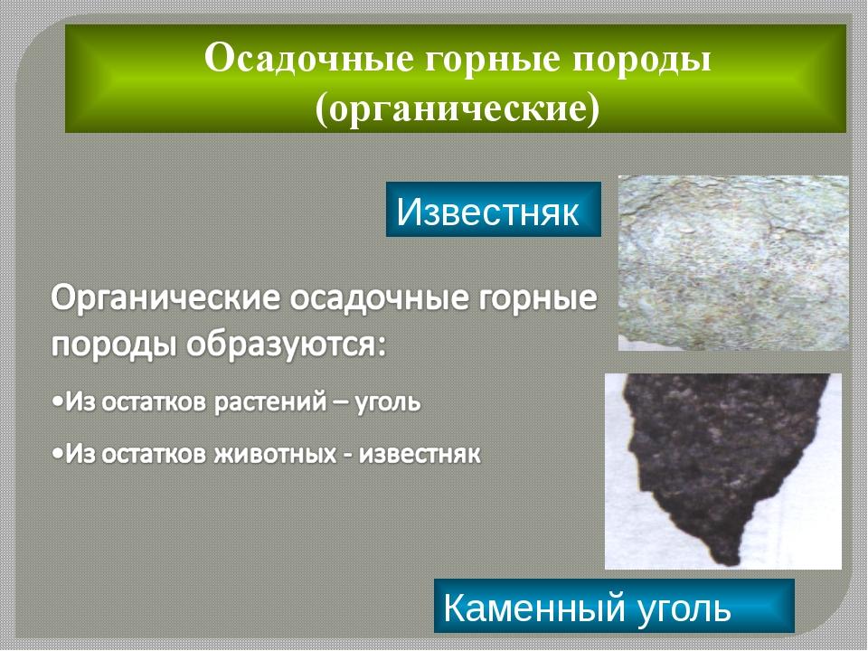 Осадочные горные породы (органические)