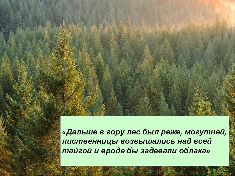 «Дальше в гору лес был реже, могутней, лиственницы возвышались над всей тайго...
