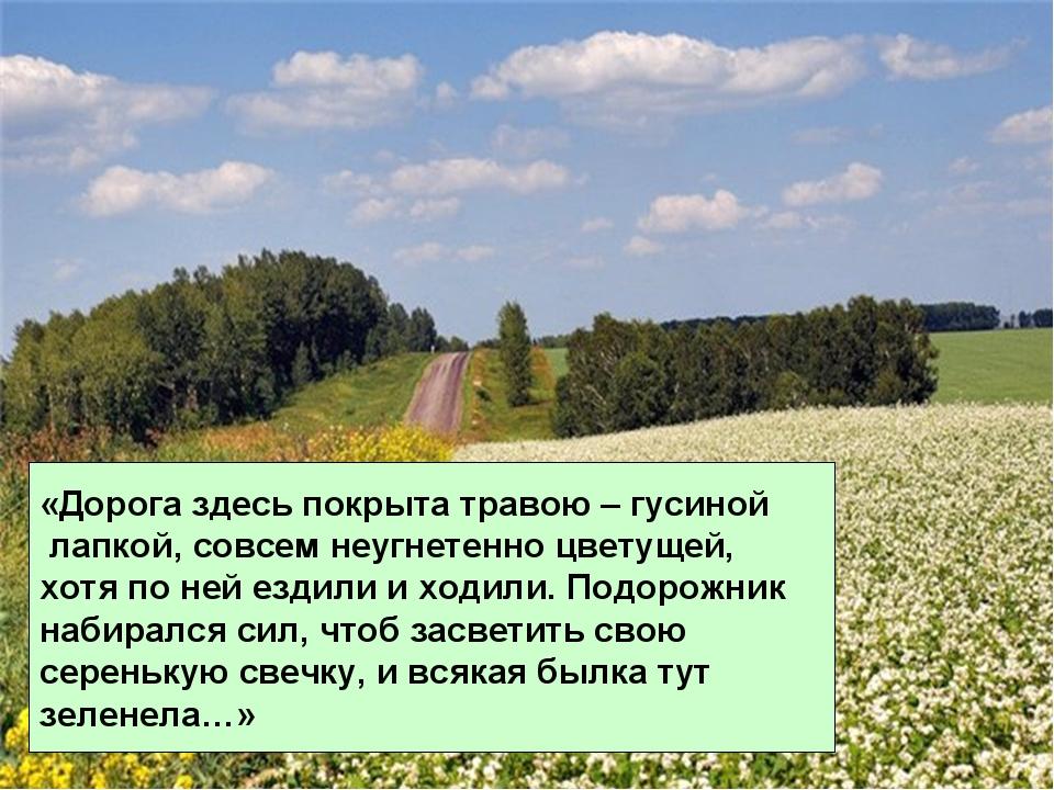 «Дорога здесь покрыта травою – гусиной лапкой, совсем неугнетенно цветущей, х...