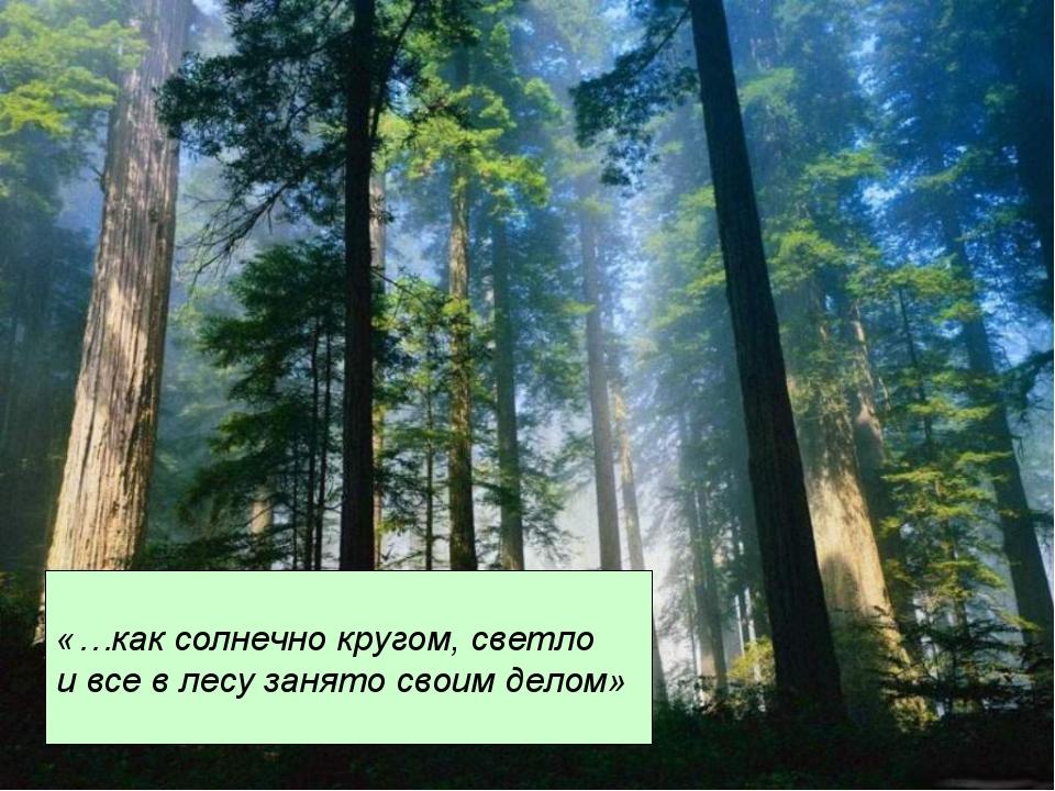«…как солнечно кругом, светло и все в лесу занято своим делом»