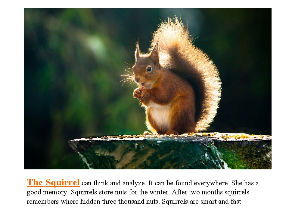 The Squirrel can think and analyze. It can be found everywhere. She has a goo...