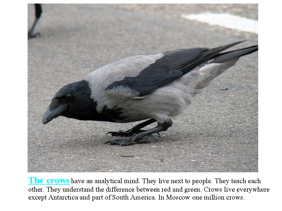 The crows have an analytical mind. They live next to people. They teach each...