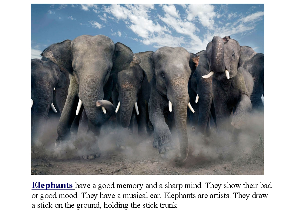 Elephants have a good memory and a sharp mind. They show their bad or good mo...