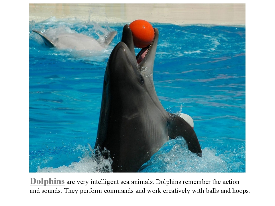 Dolphins are very intelligent sea animals. Dolphins remember the action and s...