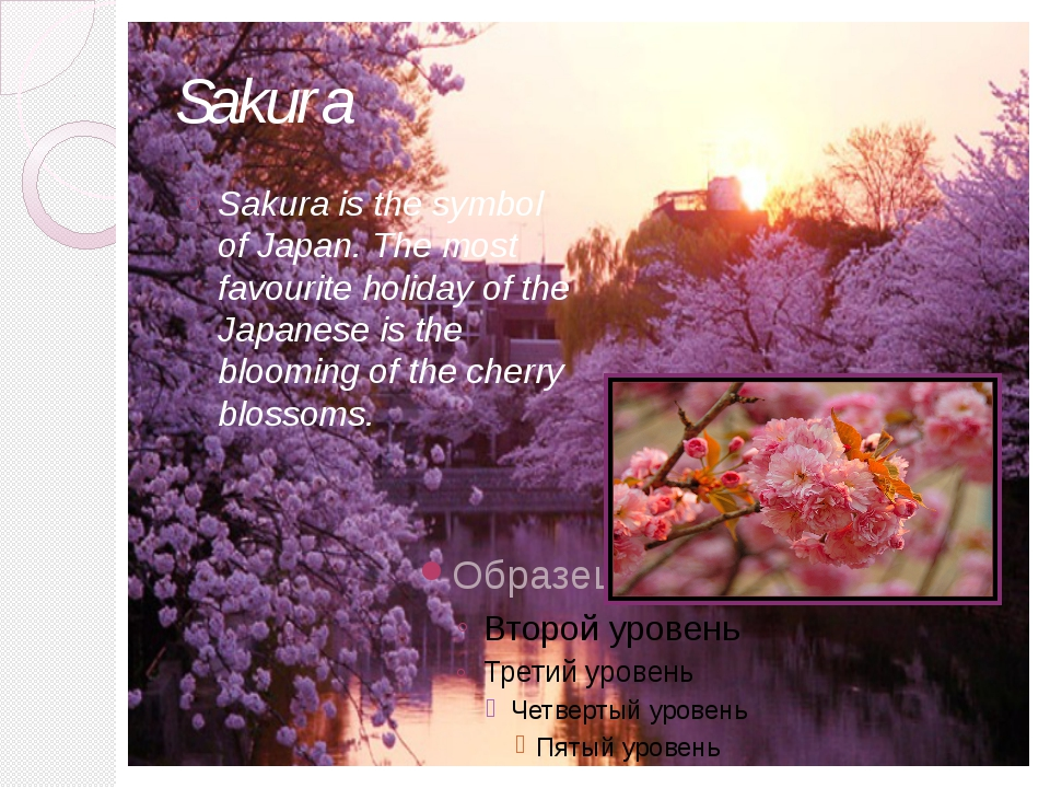 Sakura Sakura is the symbol of Japan. The most favourite holiday of the Japan...