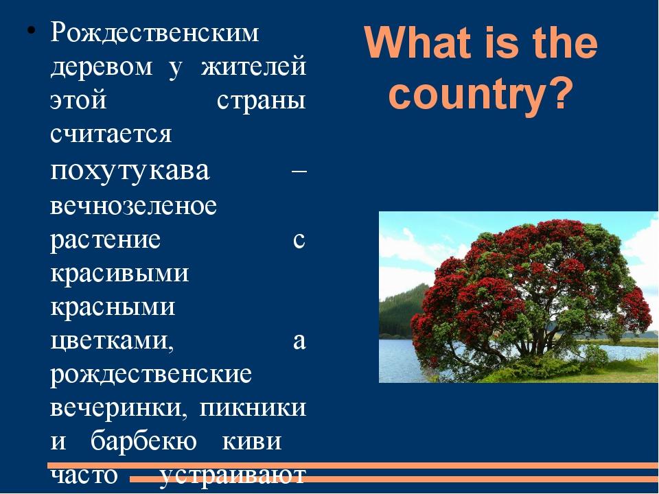 Рождественским деревом у жителей этой страны считается похутукава – вечнозел...