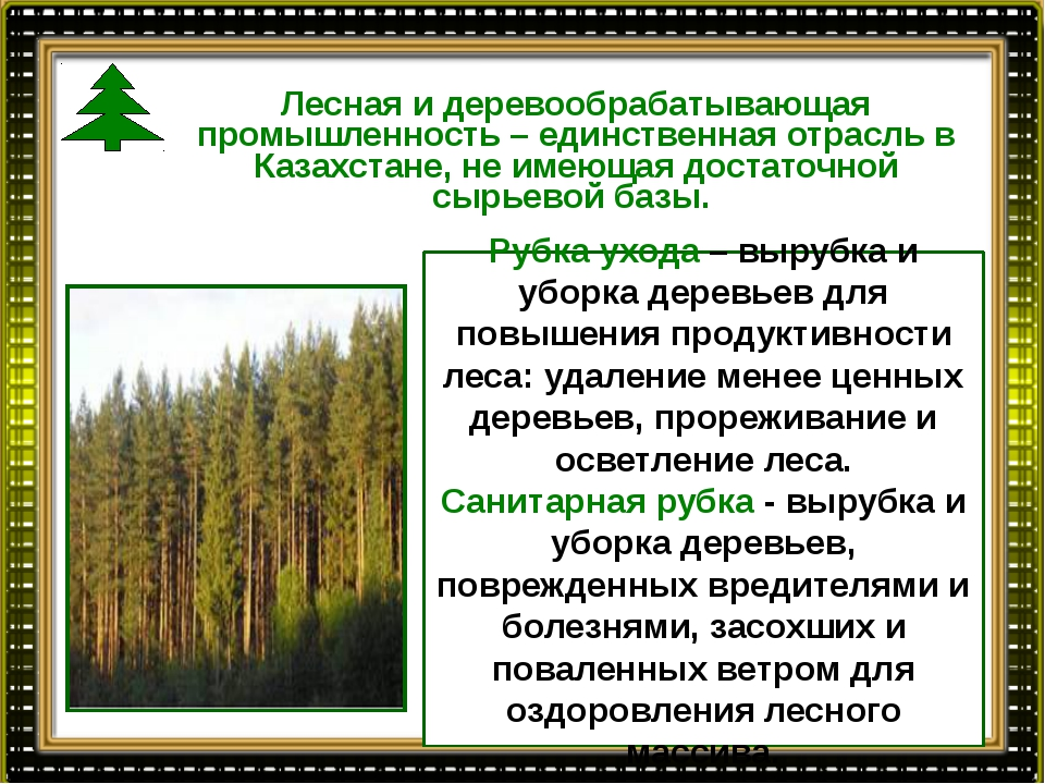 Лесная и деревообрабатывающая промышленность – единственная отрасль в Казахст...