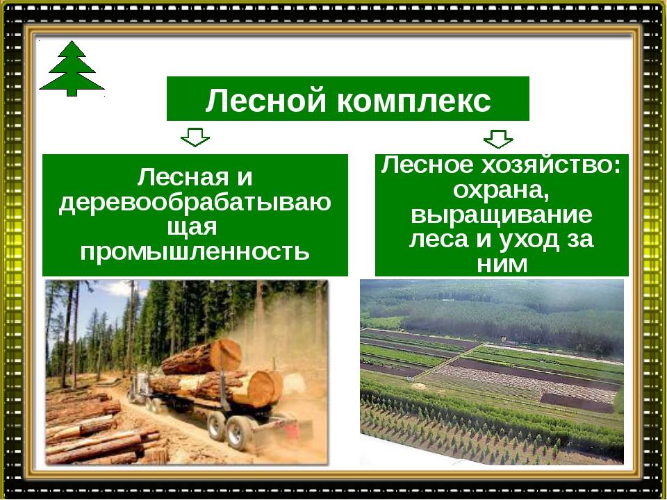 Лесной комплекс Лесная и деревообрабатывающая промышленность Лесное хозяйство...