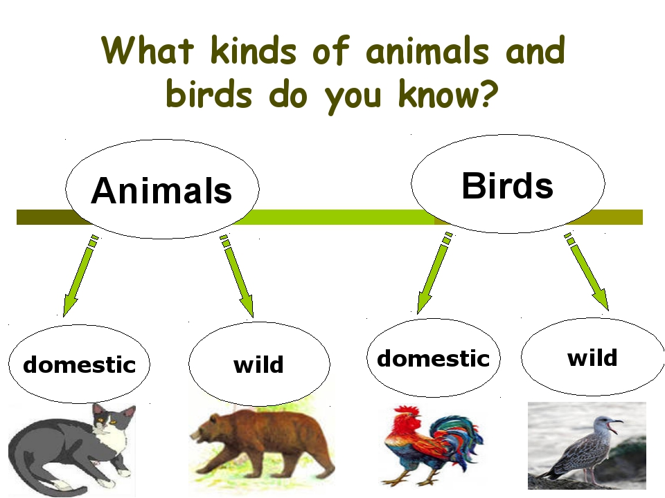What kinds of animals and birds do you know? Animals Birds domestic wild dome...