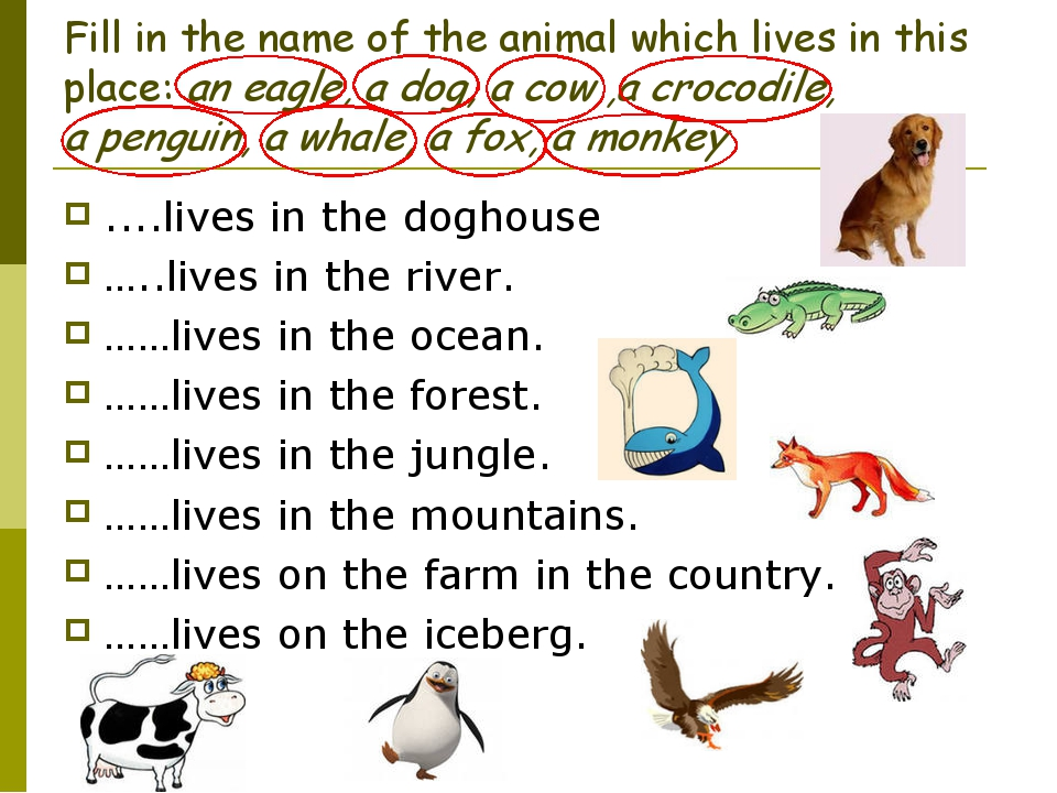 Fill in the name of the animal which lives in this place: an eagle, a dog, a...