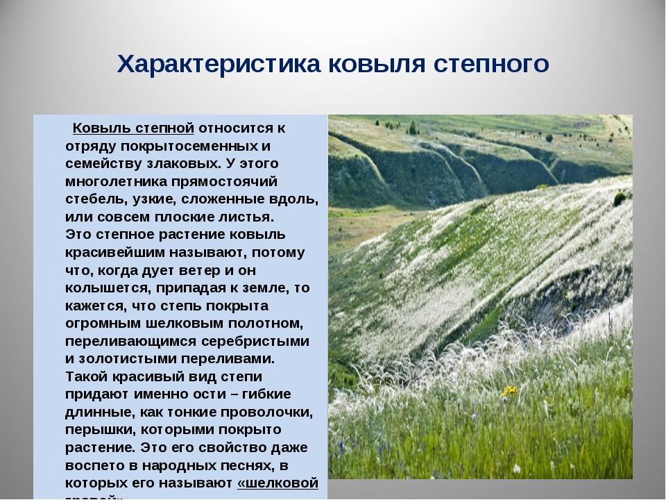 Характеристика ковыля степного Ковыль степнойотносится к отряду покрытосемен...