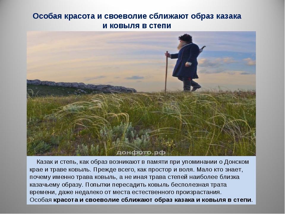 Особая красота и своеволие сближают образ казака и ковыля в степи Казак и сте...