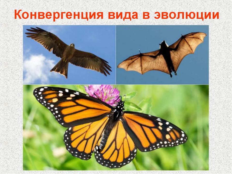 Конвергенция вида в эволюции