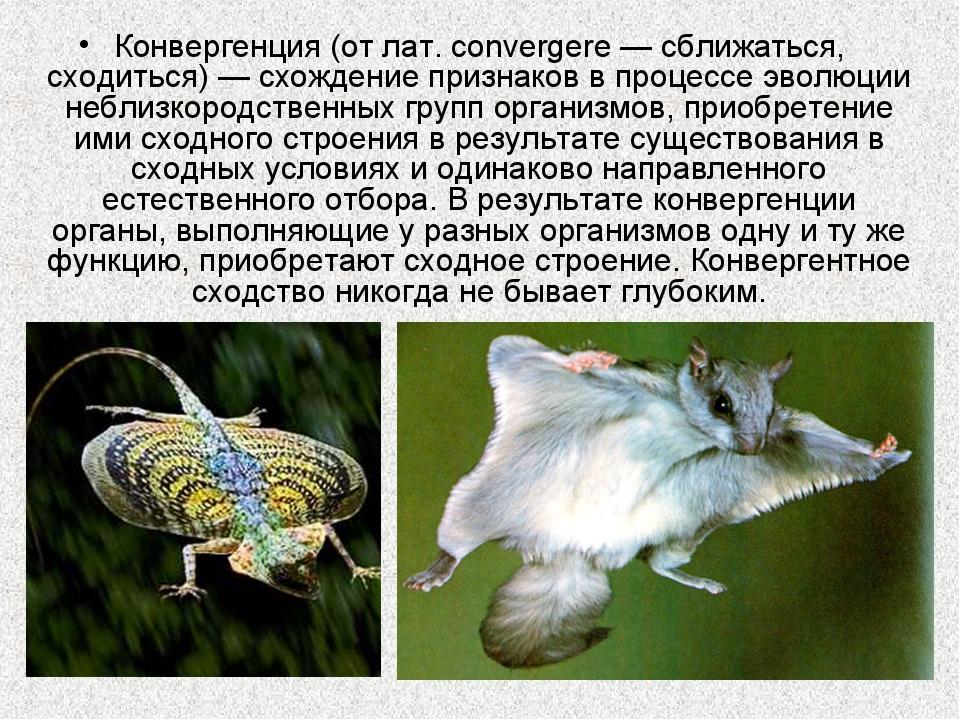 Конвергенция (от лат. convergere — сближаться, сходиться) — схождение признак...