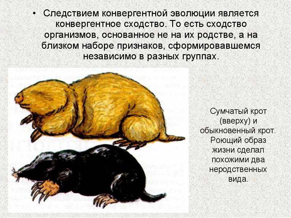 Следствием конвергентной эволюции является конвергентное сходство. То есть сх...