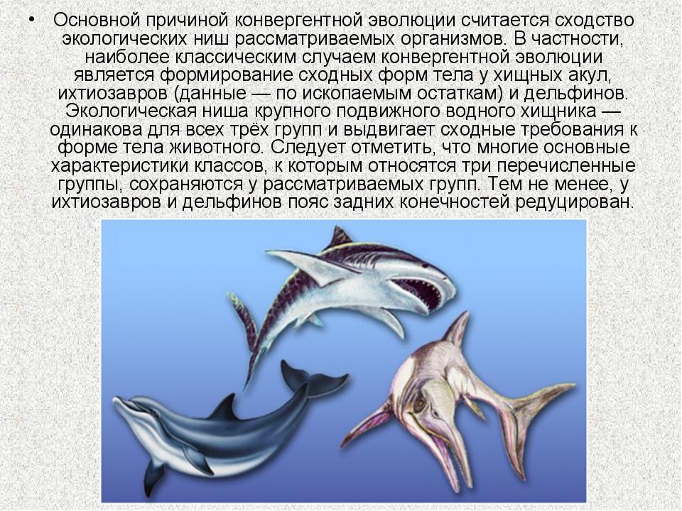 Основной причиной конвергентной эволюции считается сходство экологических ниш...